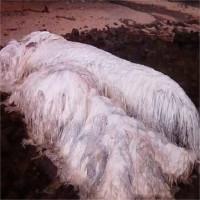 Xác sinh vật bí ẩn phủ đầy lông trắng trên bờ biển Philippines