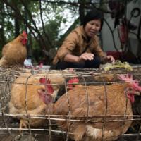 Bệnh nhân người Đài Loan đầu tiên tử vong do nhiễm cúm H7N9