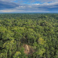 """Rừng rậm Amazon đối mặt với """"án tử"""""""