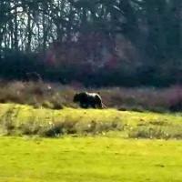 Sinh vật bí ẩn giống báo đen xuất hiện gần khu cắm trại Anh