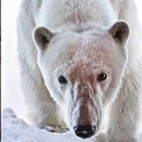 10 bức ảnh tuyệt vời về những vùng đất băng giá vĩnh cửu