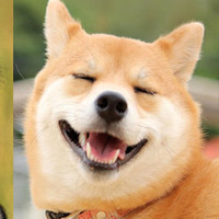Hỏi lạ: Động vật có biết cười như con người không?