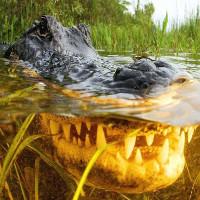 """Qua 6 triệu năm tiến hóa, """"nhan sắc"""" cá sấu không hề thay đổi"""