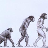 Những quan niệm sai lầm về tiến hóa
