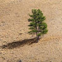 Phát hiện cơ chế giúp thực vật sinh tồn trong thời tiết cực đoan