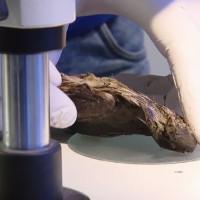 Con chim vùi dưới băng 4.000 năm vẫn nguyên nội tạng