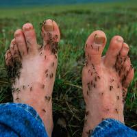 Câu chuyện cảm động đằng sau cách chống muỗi hiệu quả