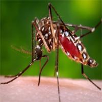 2 thời điểm trong ngày bạn cần chú ý nhất khi sốt xuất huyết đang bùng phát