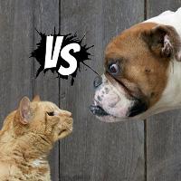 Chó hay mèo yêu con người hơn? Đã có kết luận chính thức từ khoa học!