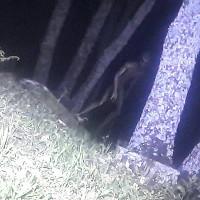 Cảnh sát chụp được ảnh sinh vật giống người ngoài hành tinh ở Argentina