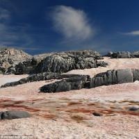 Chiêm ngưỡng hiện tượng tảo đỏ khiến băng Bắc Cực tan nhanh