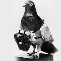 Chim gián điệp được trang bị thế nào?