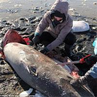 Nước Mỹ đang lạnh đến mức đến cá mập cũng phải chết cóng