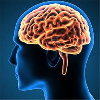 Bộ não lớn giúp thông minh hơn nhưng cơ bắp ít hơn?
