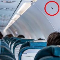 Ký hiệu hình tam giác màu đen trên máy bay có ý nghĩa gì?