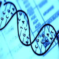 """Kỹ thuật chỉnh sửa gene CRISPR của Nhật Bản đã đạt tới độ """"chính xác tuyệt đối"""""""