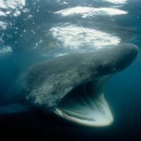 Đàn cá mập phơi 1.400 con khiến chuyên gia bối rối