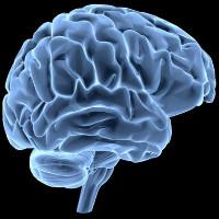 Lý giải hiện tượng não bộ con người phát triển kích thước lớn