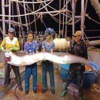 """Ngư dân Thanh Hóa bắt được cá hố """"khủng"""" dài hơn 4 mét, nặng gần 1 tạ?"""