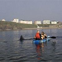 Hãi hùng cảnh cá mập khổng lồ lượn quanh nhóm người chèo thuyền