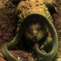 Trận kịch chiến giữa ếch yêu tinh và rắn nước
