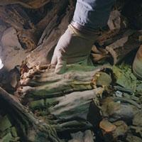 Phát hiện hơn 60 xác ướp chôn chung: Lộ điều kinh khủng