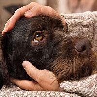 8 căn bệnh nguy hiểm bạn có thể lây từ chó