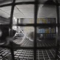 NASA đưa chuột vào không gian và kết quả thật bất ngờ