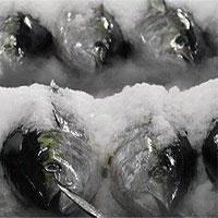 Lý giải nguyên nhân hàm lượng thủy ngân cao trong cá biển