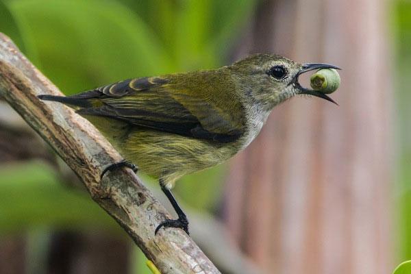Tổ của chim sâu thường có dạng hình bọng.