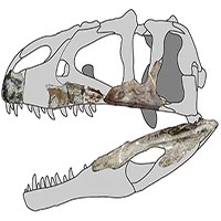 """Hóa thạch 114 triệu năm tiết lộ """"siêu dã thú"""" mới"""