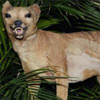 Rộ tin hổ Tasmania tuyệt chủng 80 năm trước xuất hiện ở Australia