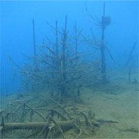 Phát hiện gỗ 19 triệu năm tuổi dưới đáy biển