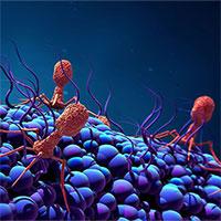 """Phát hiện loại virus khổng lồ """"ăn sống"""" vi khuẩn"""