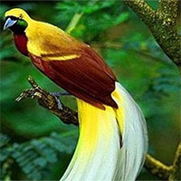 11 loại chim đẹp nhất hành tinh