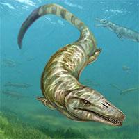 Pannoniasaurus: Quái vật dài 6 mét ở vùng nước ngọt của Hungary