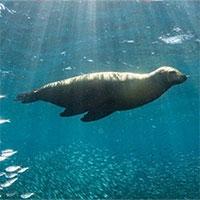 Hàng nghìn loài chạy trốn đến các cực của Trái đất vì khí hậu nóng lên