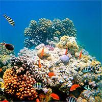 Ngạc nhiên cách san hô tự bảo vệ mình trước sự gia tăng nhiệt độ nước biển