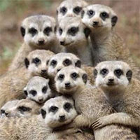 Loài vật nào tàn nhẫn nhất thế giới?