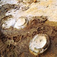 Bất ngờ phát hiện hóa thạch khoảng 200 triệu năm tuổi tại Gia Lai