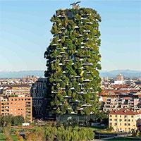 """Cuộc sống """"rừng rậm"""" ngay trung tâm thành phố"""