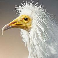 Chân dung các loài chim quý hiếm, tuy đơn giản nhưng lại tuyệt đẹp