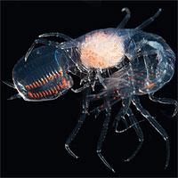 Sáu sinh vật kỳ diệu có thể nhìn xuyên thấu