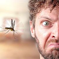 Tại sao muỗi vo ve bên tai?