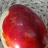 """Lão nông đổi đời khi đào trúng hai quả """"trứng máu"""", chuyên gia định giá lên tới 2,8 tỷ đồng"""