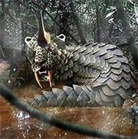Loài quái vật kỳ quái ở châu Phi, đoạt mạng cả cá sấu