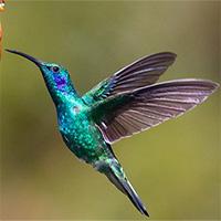 Loài chim có thể cảm nhận vị ngọt không?