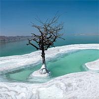 Cận cảnh loại cây đơn độc mọc giữa đảo muối của biển Chết