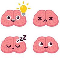 """Tại sao lý thuyết 3 não lại ví não người với """"não bò sát"""", """"não thú""""..."""