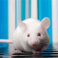 """Những con chuột sơ sinh có thể """"mơ"""" về việc di chuyển trong thế giới thực trước cả khi chúng mở mắt"""